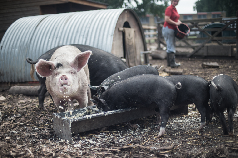 The Pig Idea - Photographer Chris King Documenting Food Waste