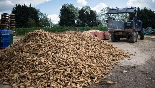Feedback – Ranking supermarkets on reducing food waste