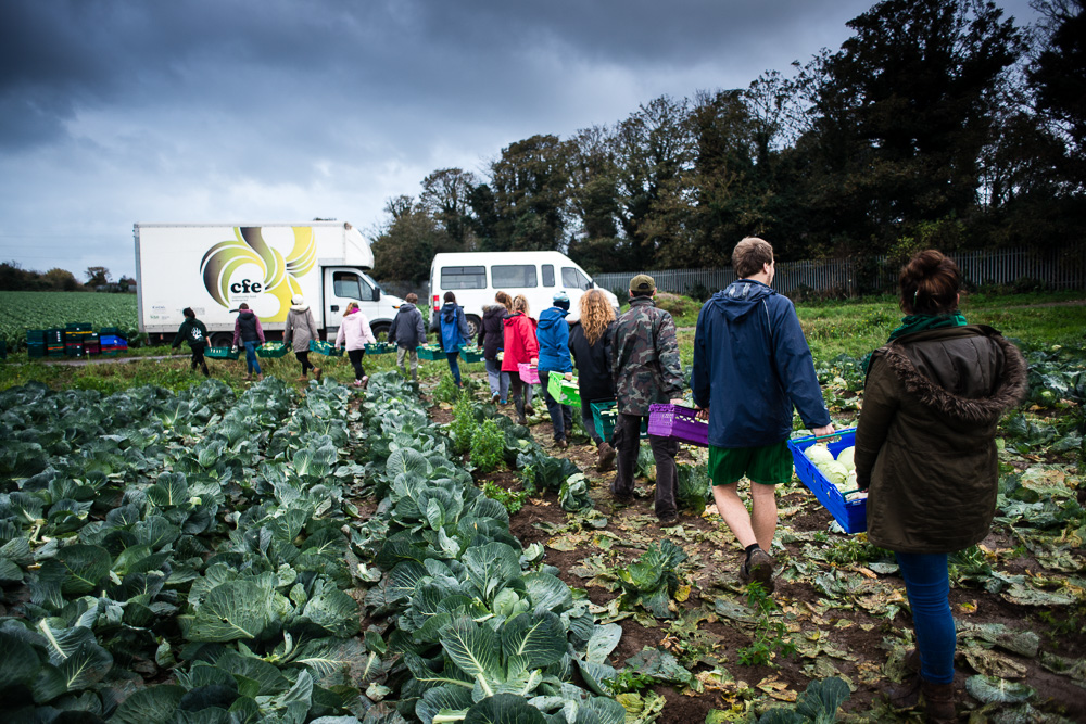 Gleaning surplus food that would go to waste - Documentary Photography by Chris King