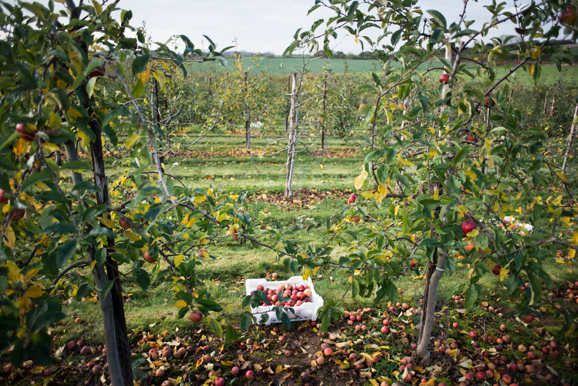 The Gleaning Network - Documenting food waste in the UK - Chris King Photography